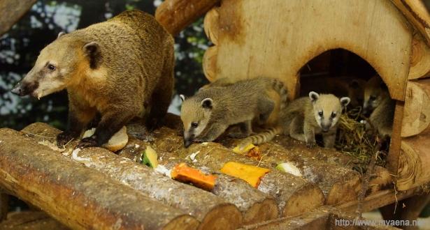 台北市立动物园福州小猫熊亮相
